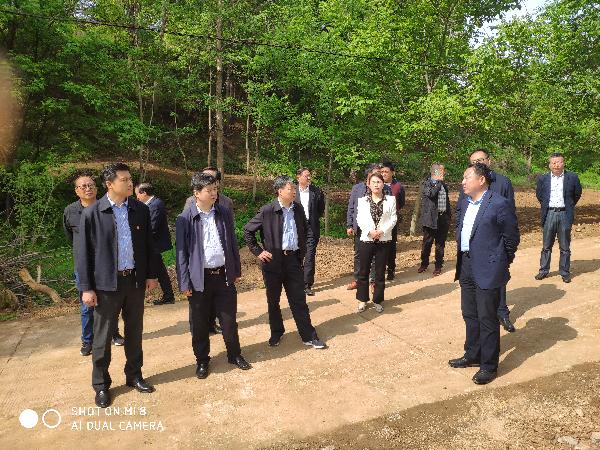 商洛市政协调研组来洛南县调研土地整理工作 (6)