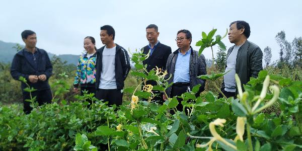 """洛南县保安镇组织政协委员开展""""双..."""